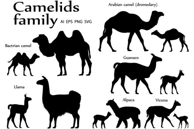 Camelids family silhouette