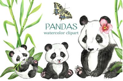 Panda watercolor clip art. Panda Family watercolor clipart.