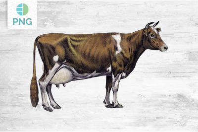 Cow Clipart Guernsey