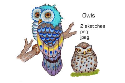 Doodle Owls. Hand drawn sketch.