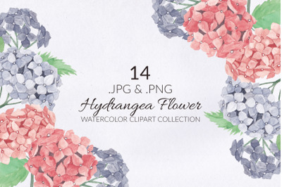 14 Hydrangea Flower Watercolor Illustration Set