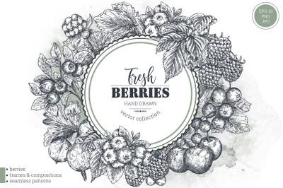 Berries vector collection