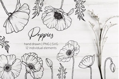 Poppy flowers and leaves SVG, PNG. Hand drawn doodle flowers