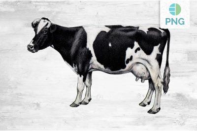 Cow Clipart Holstein