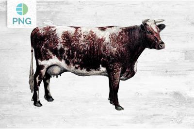 Cow Clipart Shorthorn