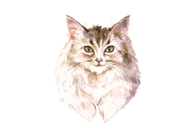 Hand-drawn watercolor and pencil cat portrait