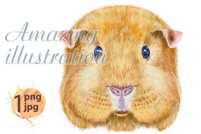 Watercolor portrait of Self guinea pig
