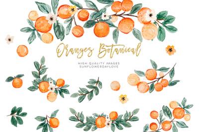 Orange Summer Clipart, Citrus clipart, Vintage Orange Illustration