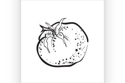 Hand drawn sketch tomato