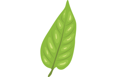 Green Pepper Leaf
