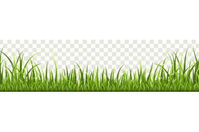 Grass border. Panorama of natural lawn or meadow in garden, isolated v