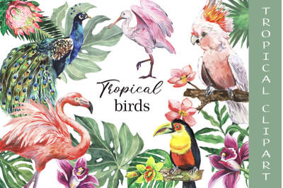 Watercolor tropical birds. Summer tropical flamingo, parrot, toucan.