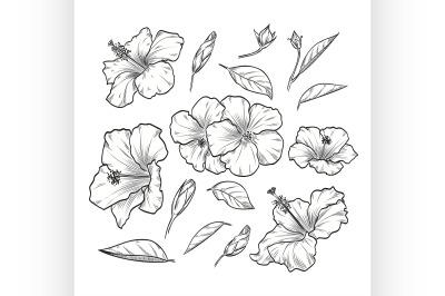 Vector hand drawn elegant hibiscus