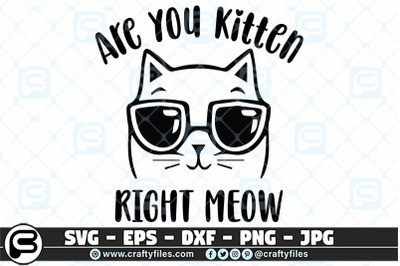 Are you ketten me right now SVG, Cute cat with sunglasses SVG