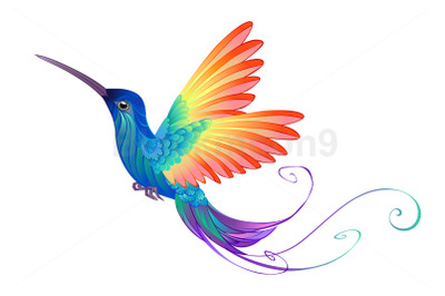 Bright Rainbow Hummingbird
