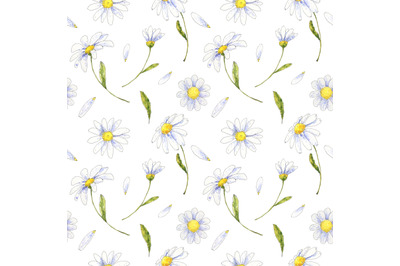 Chamomile, daisy floral seamless pattern hand drawn in watercolor