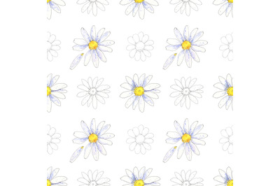 Chamomile, daisy floral seamless pattern