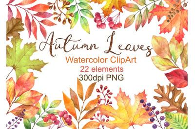 Watercolor autumn leaves clipart png maple Oak Leaves