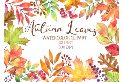 Watercolor autumn leaves clipart png maple Oak Leaves