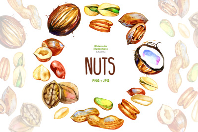 Watercolor nuts