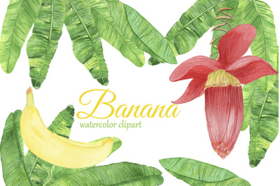 Watercolor Banana Clipart. Banana Flower PNG