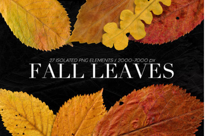 27 Isolated Fall Leaves