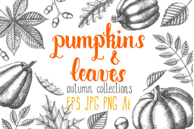 Vector Pumpkin and leaves Set. Autumn collection.