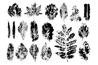 Set leaf plant print monotype in isolated white background.