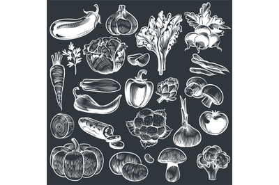 Chalk drawing of vegetables. Various vintage hand drawn vegetable, org