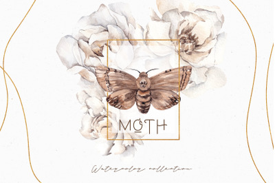 Moth. Watercolor and graphic collection