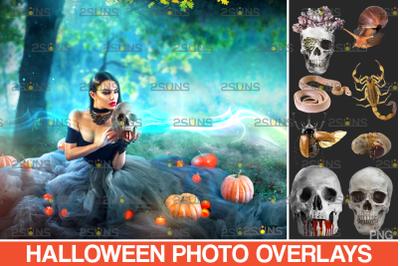 Halloween clipart & Photoshop overlay. Halloween overlay