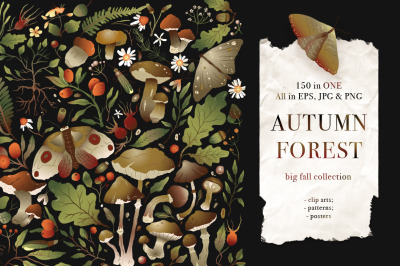 Autumn Forest. Big Graphic Set.