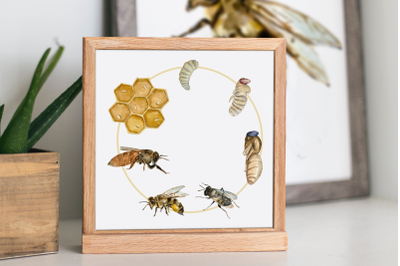 Bee Life Cycle Clip Art and Print