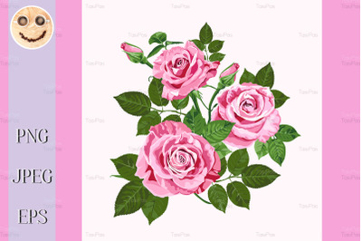 Pink roses bouquet isolated on the white.