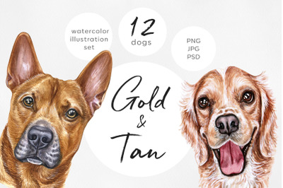 Golden & Tan dogs. Watercolor dog set illustrations. Cute 12 dogs.