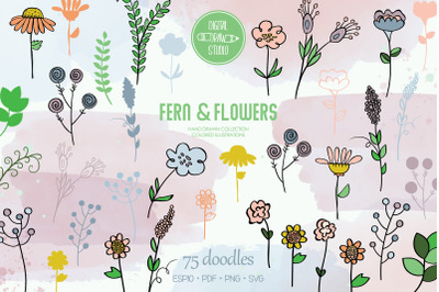 Meadow Ferns & Wild Flowers   Colored Hand Drawn Nature, Leaves, Plant
