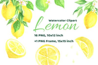 Watercolor Lemon Citrus Fruit Hand Drawn Clip Art