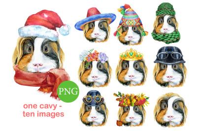 Cute watercolor guinea pig