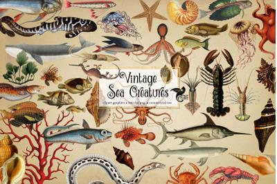 Vintage Sea Creatures Clipart