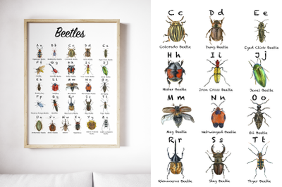 Beetles ABC Posters