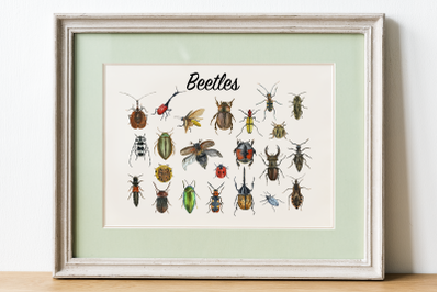 Beetles Clip Art Set