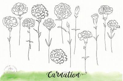 Carnation flower sketch drawin
