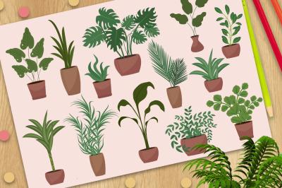 Big set of potted plants