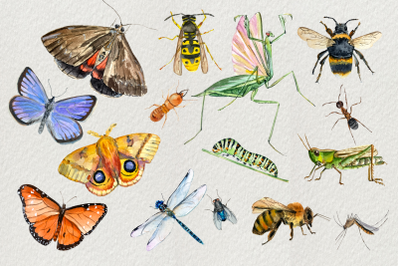 Watercolor Insect Clip Art