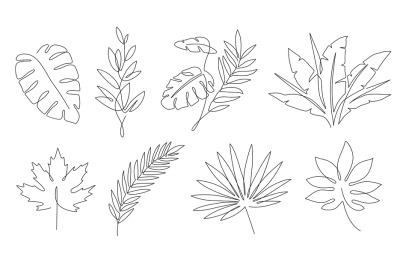 Tropical leaves. Palm tree and maple linear leaf. Tropic jungle and be