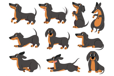 Dachshund. Cute dogs characters various poses hunting breed, design fo