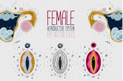 Female reproductive system. Vagina