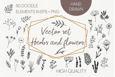 Vector organic herbs and flowers