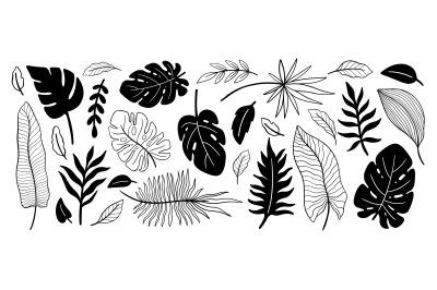 Plant collection black color.