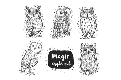 Owl sketch collection.